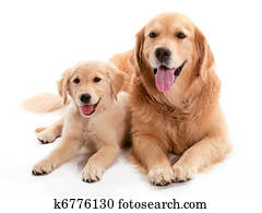 Dog Buddys
