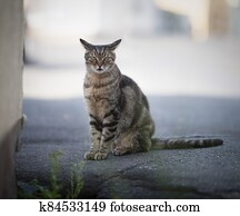 Stray Cat standing on the street