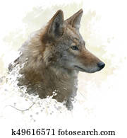 Coyote watercolor