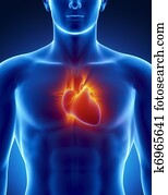 Human heart in detail with glowing rays