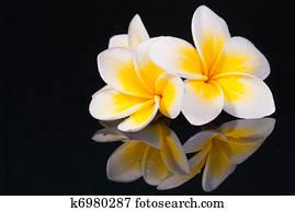 Leelawadee flower and its reflecio