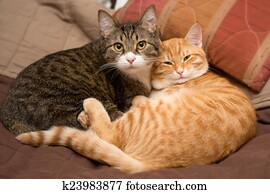 Friendship of the two cats