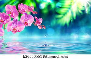 orchid in zen garden with droplet