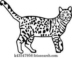 Leopard bengal cat