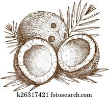 illustration of coconut