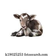 Newborn Calf, black and white baby cow