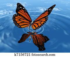 Monarch butterfly landing in water