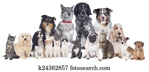 Big group of pets