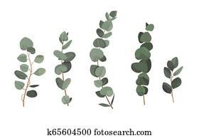 satz, von, eukalyptus, zweige, freigestellt, wei?, hintergrund.