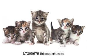 Cute Newborn Baby Kittens Easily Isolated on White