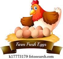Fresh eggs from the farm