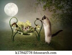 Mama cat lulls kittens