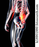 Anatomy - Back Pain