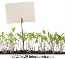 art seedlings of tomato and pointer class