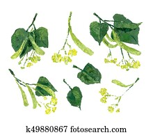 Flowers of linden with green leaves. Oil painting