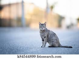 stray cat on the street on mallorca