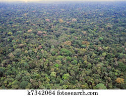 Primary rainforest in the Amazon