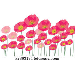 Row of poppy flowers isolated on wh
