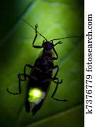 Firefly Flashing at Night - Lightning Bug