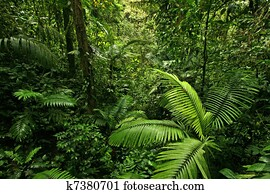 Dense Rain Forest Jungle