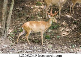 White Tailed Deer Wildlife Animals