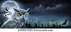 Halloween Scene With Owl