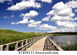 Seaside marsh boardwalk
