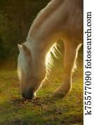 Palomino horse grazing in autumn day
