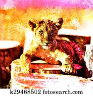 Lion cub in nature with blue sky and wooden log. eye contact. Abstract Collage.