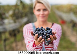 Portrait of woman holding grapes in vineyard in autumn, harvest concept.