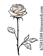 Beautiful single pink rose flower isolated on the white background, vector illustration