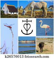 Collage of Camargue photos, France