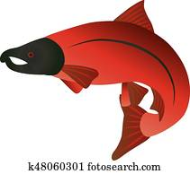 Coho Salmon Color Illustration
