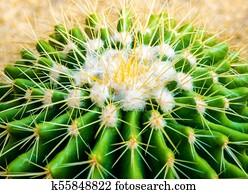 kaktus arten stock photo bilder 889 kaktus arten lizenzfreie bilder und fotografien erh ltlich. Black Bedroom Furniture Sets. Home Design Ideas