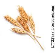 Wheat ears isolated