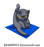 Yoga cat - Angry cat - grey cat - fat cat