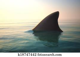 Shark fin above ocean water.