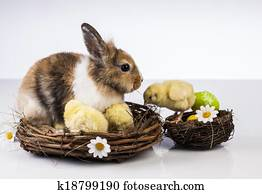 Easter, Bunny, Rabbit, Chicken