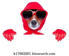 lady housewife dog