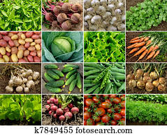 vegetables and greens