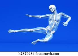 Anatomy - Martial Arts