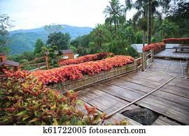Tropical Rural Casa Jardín De Casa Bambú De Madera En
