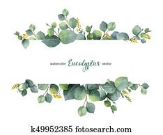 aquarell, vektor, grün, blumenbanner, mit, silberner dollar, eukalyptus, bl?tter, und, zweige, freigestellt, wei?, hintergrund.