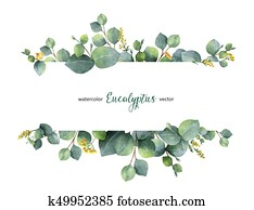 Watercolor vector green floral banner with silver dollar eucalyptus leaves and branches isolated on white background.