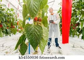 pest control in a greenhouse