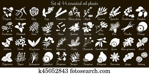 Big vector set of 44 flat style essential oil plants. White Silhouettes on black
