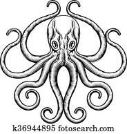 Octopus or Squid Illustration
