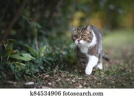 cat lurking in the garden