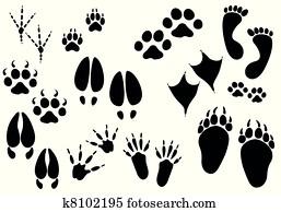 Vector - animal trails
