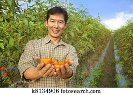 asian farmer holding tomato on his farm